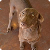 Adopt A Pet :: Takis - San Antonio, TX