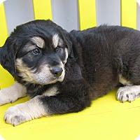Adopt A Pet :: Larry - Groton, MA
