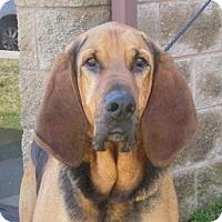 Adopt A Pet :: Rusty - St, Augustine, FL