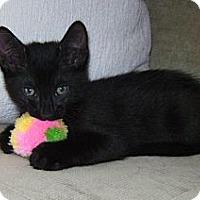 Adopt A Pet :: Beatle - Delray Beach, FL