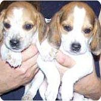 Adopt A Pet :: Wilbur and Waldo - Antioch, IL