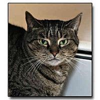 Adopt A Pet :: Gidget - Howell, MI