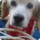 Adopt A Pet :: Adamm