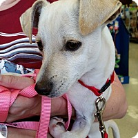 Adopt A Pet :: Biscuit - Vista, CA