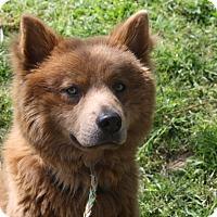 Adopt A Pet :: Theodore - Sacramento, CA