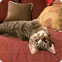 Adopt A Pet :: Hardy - St. Louis, MO