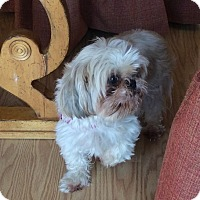 Adopt A Pet :: FERGIE - Eden Prairie, MN