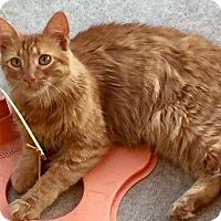 Adopt A Pet :: GINGER - Sacramento, CA