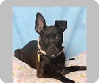 Terrier (Unknown Type, Medium) Mix Dog for adoption in Pittsboro, North Carolina - Isabella