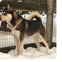 Adopt A Pet :: Checkers - Aurora, CO