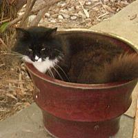 Adopt A Pet :: Satchmo - Bonita Springs, FL