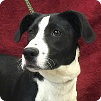 Adopt A Pet :: Sallyann - Hagerstown, MD