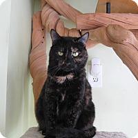 Adopt A Pet :: Pamina - Sherman Oaks, CA