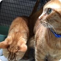 Adopt A Pet :: Rocky - Diamond Springs, CA