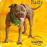 Adopt A Pet :: Batty - Topeka, KS