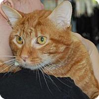 Adopt A Pet :: Francisco - Brooklyn, NY