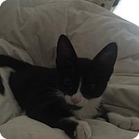Adopt A Pet :: Remi - Albemarle, NC