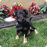 Adopt A Pet :: Jepp - New Oxford, PA