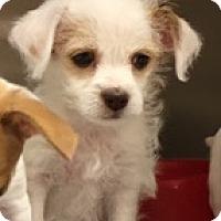 Adopt A Pet :: Bender - Fort Collins, CO