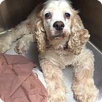 Adopt A Pet :: Lilly- Homeless at 17:( - Oak Ridge, NJ