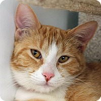 Adopt A Pet :: Camelia - Mountain Center, CA