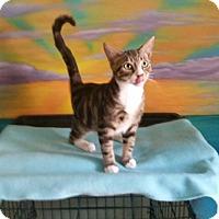 Adopt A Pet :: Baxter - Chesapeake, VA