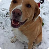 Adopt A Pet :: Henry - Brunswick, OH