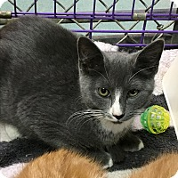 Adopt A Pet :: Tinker bell - Richboro, PA