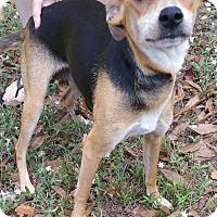 Fort Myers Florida Dog Adoption