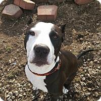 Adopt A Pet :: Rulon - Dayton, OH
