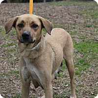 Adopt A Pet :: Tootsie - Conway, AR