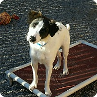 Adopt A Pet :: Winston - Apache Junction, AZ