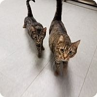 Adopt A Pet :: C-19 (2) - Indianola, IA