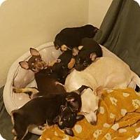 Adopt A Pet :: Tiny - Chico, CA
