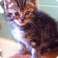 Adopt A Pet :: Twiggy - Cocoa, FL