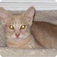 Adopt A Pet :: Mary (KL) - Little Falls, NJ