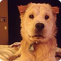 Adopt A Pet :: Tabitha - Scottsdale, AZ
