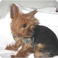 Adopt A Pet :: Kara - Mooy, AL