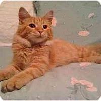 Adopt A Pet :: Pumpkin - Mesa, AZ