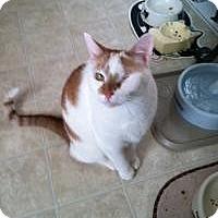 Adopt A Pet :: Sonny - Medford, NJ