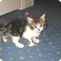 Adopt A Pet :: SEBASTIAN - Hamilton, NJ