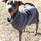 Adopt A Pet :: Johnathan (18 lb) PERFECT DOG!