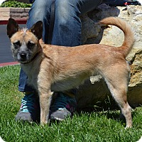 Adopt A Pet :: Honey - Simi Valley, CA