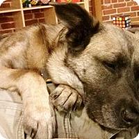 Adopt A Pet :: Molly - Castro Valley, CA