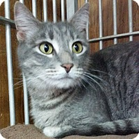 Adopt A Pet :: Abigail - Greenville, NC