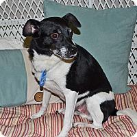 Adopt A Pet :: Frasier - Beaumont, TX