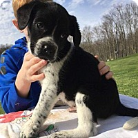 Adopt A Pet :: Marshall - Wilmington, DE