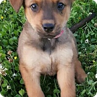 Adopt A Pet :: Sky (HAS BEEN ADOPTED) - Albany, NY