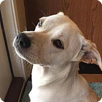 Adopt A Pet :: Jesse - San Antonio, TX