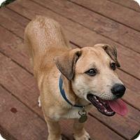 Adopt A Pet :: Niko - Homewood, AL